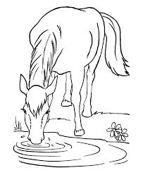 סוס רעב וצמא