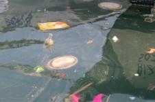 """התמונות צולמו במהלך שנת 2015 התאריך מופיע בקטן מציד שמאל למטה. לצערנו נמל יפו, השייך לעירית תל-אביב יפו, אינו מצליח לשמור באופן מלא על ניקיון הנמל. אשפה שהיא בעיקרה פלסטיק של מוצרים כמו חטיפים, אריזות מזון ושקיות """"גופיה"""" רגילות. הפלסטיק לא נעלם הוא נשאר במערכת האקולוגית של הים התיכון ומתפרק למרכיבים קטנים של זיהום פלסטי רעיל. הזיהום עולה במערכת האקולוגית ומגיע לרקמות הדגים אותם רבים אוכלים בבית או במסעדה."""